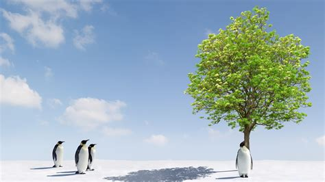 Miracle Hd Green Tree Miracle For Penguins Wallpapers And Images Wallpapers Pictures Photos