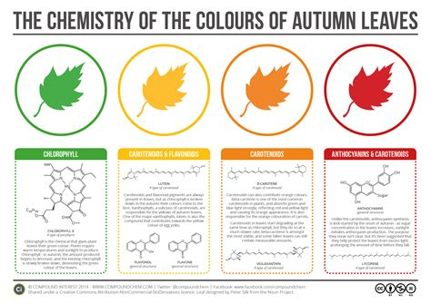 what causes leaves to change color in the fall compound interest the chemicals the colours of