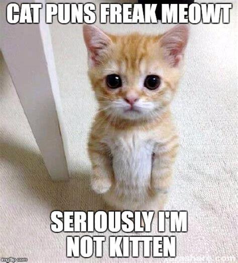 Seriously Meme - cute cat meme imgflip