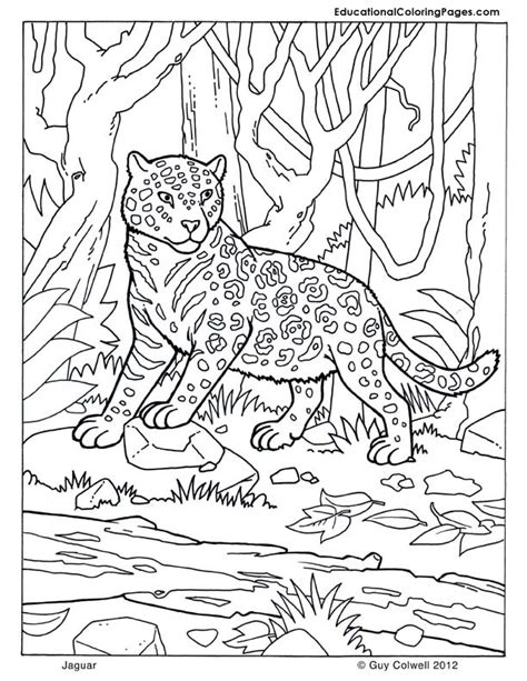 coloring pages of camouflage animals 1000 images about coloring pages on pinterest mammals