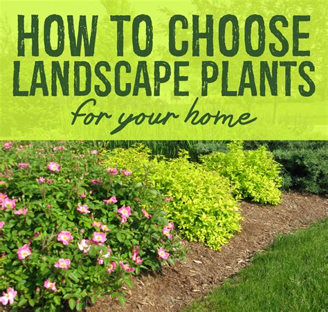 landscape plants mckay s choosing the right plants for your landscape