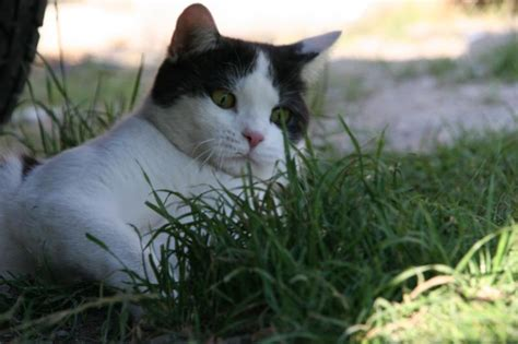 katzen zu hause zu hause die w 252 rmer bei katzen zu bringen