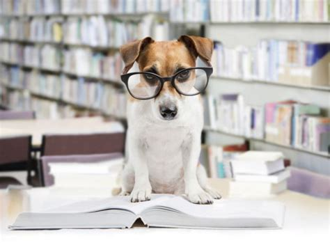 test ingresso veterinaria test veterinaria 2016 cosa studiare studentville