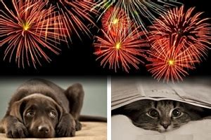 how to comfort dogs during fireworks pets and fireworks handling pet anxiety on the 4th of