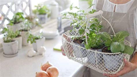 indoor herb garden kits indoor gardening