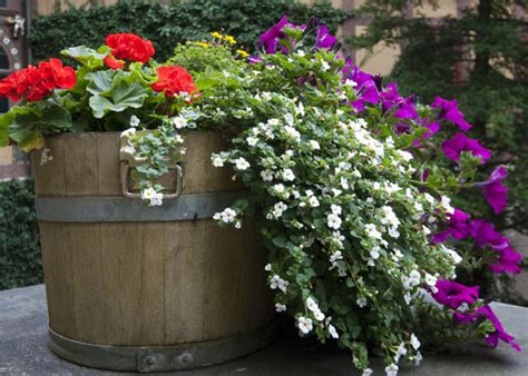 north whiskey barrel planting tips garden club