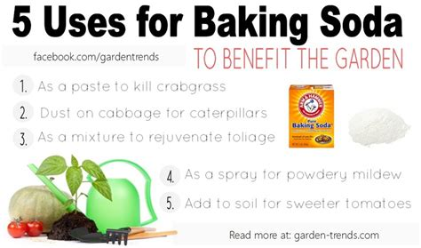 killing crabgrass with baking soda 5 uses for baking soda in the garden baking soda soda