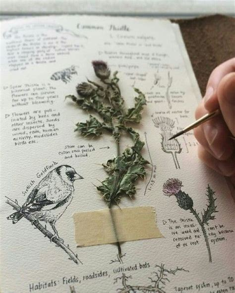 libro botanical sketchbook inspiration and 25 best ideas about nature journal on field notes sketch journal and sketchbooks