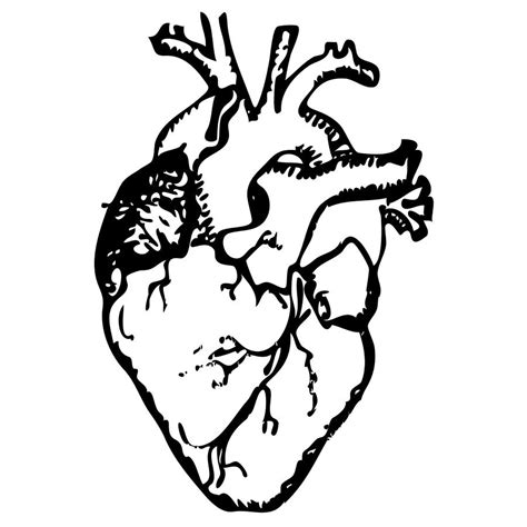 www full human heart coloring pages