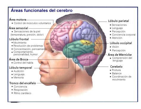el cerebro obeso las 1503139301 la m 225 quina perfecta el cerebro nutrimania