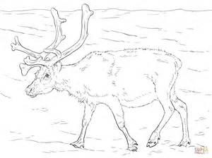 norway christmas coloring page svalbard reindeer coloring page free printable coloring