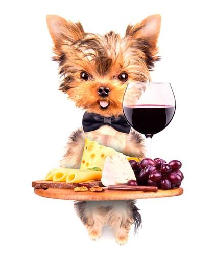yorkie food recipes 20 fascinating best boards for owners