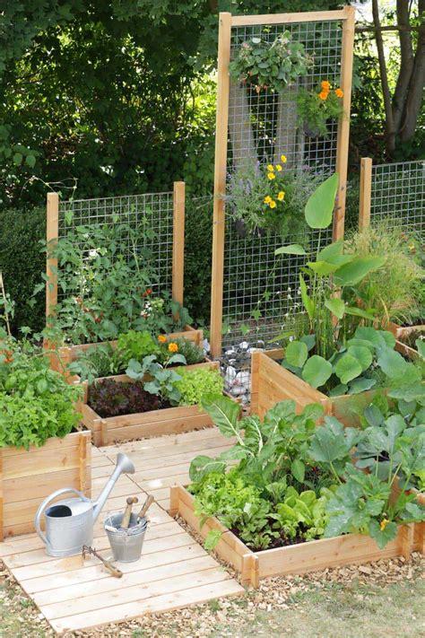 amazing ideas  growing  vegetable garden