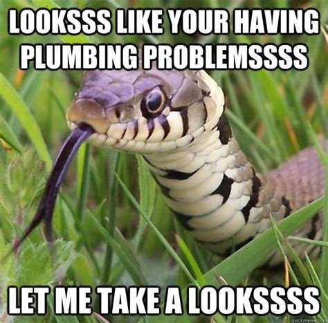 Snake Meme - 25 very funny snake meme photos and images