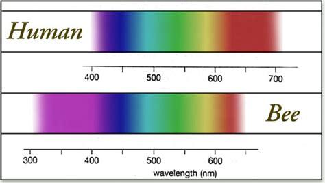 cat color vision cat vision spectrum www pixshark images galleries