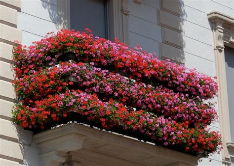 concorso balconi fioriti avellino concorso quot balconi fioriti quot 2015 bassa irpinia