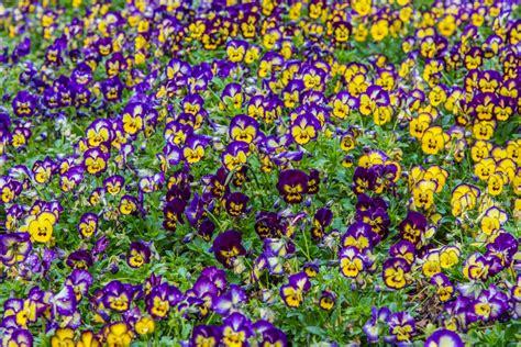 callaway gardens pine mountain ga lights callaway gardens lights groupon decoratingspecial com