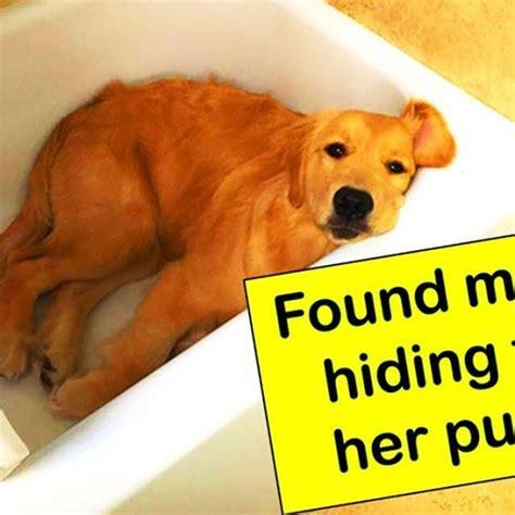 funny dog memes clean funny dog memes  dog meme face
