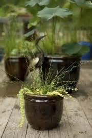 jardins d eau en pots lilianne lacroix cour