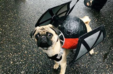 pug wars portland hosts pug tastic wars parade