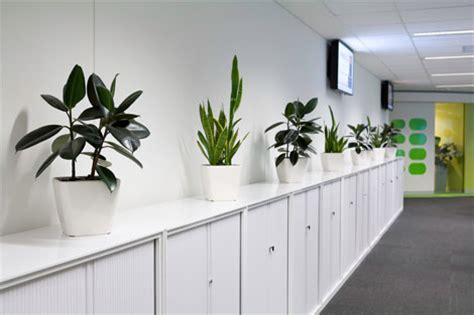 office plant decoration kl office plants ambius new zealand