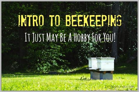 How To Keep Bees Or Bee Keeping In Rhode Island how to keep bees an intro to help get your