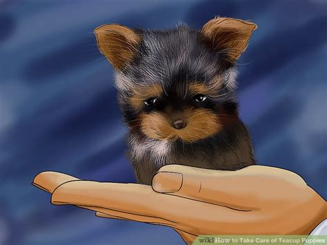 images of teacup dogs 3 ways to take care of teacup puppies wikihow