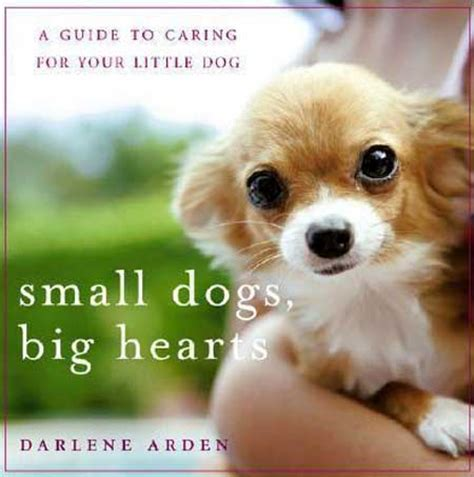 big dogs big hearts chihuahua the small with a big breeds picture