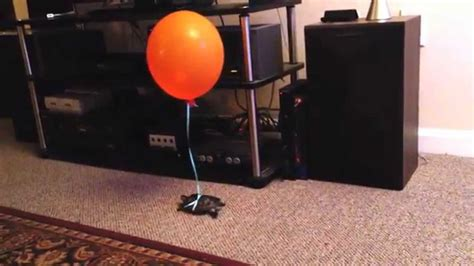 how to your not in the house how to not lose your pet turtle as he roams around the house balloon on a string