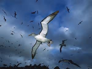 Juan Gaviota Flowers - beautiful albatross birds wallpapers pictures images