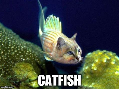 Catfish Meme - if you ve never seen one imgflip