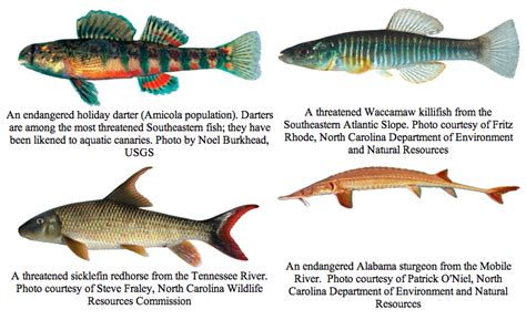 Natrual Made Fish Nutrusi Usa freshwater fish usa freshwater fish of united states