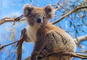best australia tours australia vacations tours best travel packages 2017
