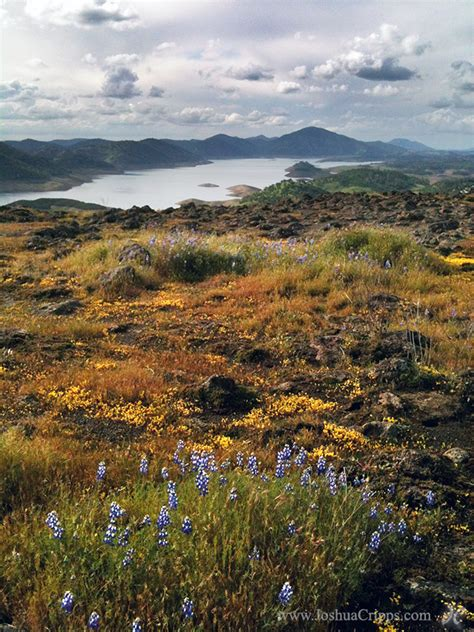 sierra nevada foothill wildflower alert joshua cripps
