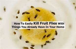 home remedy for fruit flies 15 home remedies to get rid of flies