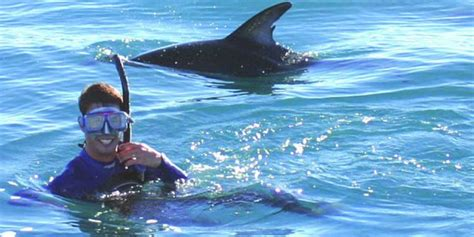 catamaran mauritius dolphins swim with dolphins 2 5 hours mauritius attractions