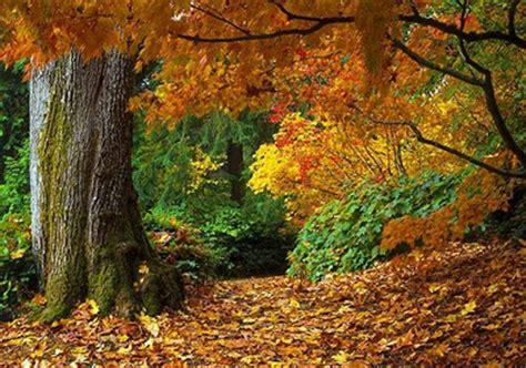 Florestas Mais Bonitas do Mundo   Fotos e Imagens   Meio Ambiente   Cultura Mix
