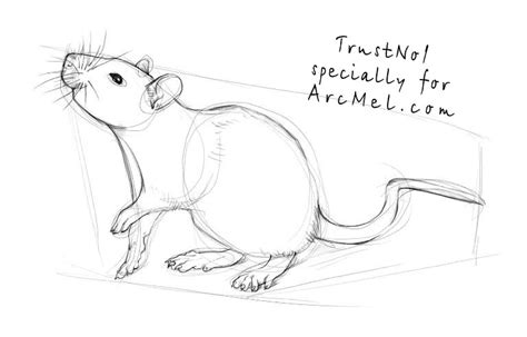 how to draw a rat step by step arcmel com