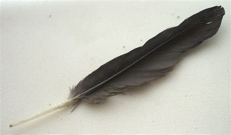 feather with feathers reference pictures