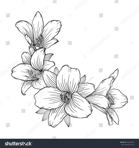 how to draw hands by lily draws on deviantart beautiful monochrome black white bouquet lily stock vector
