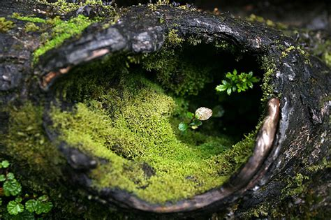 what are micro micro ecosystem flickr photo