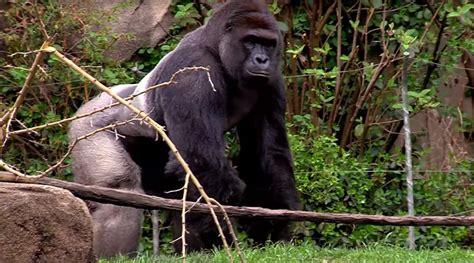 cincinnati zoo botanical garden trading zoo animal with visitors becomes best option