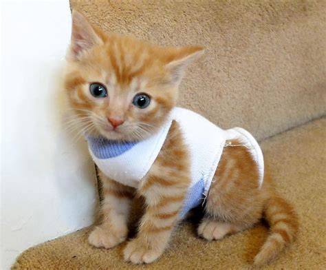 tying sock around cat is what s cuter than cats kittens in socks rescued by rspca