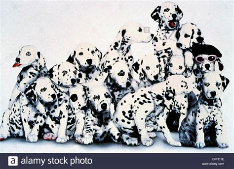 101 dalmatians puppies 101 dalmatians 1996 puppies www pixshark images galleries with a bite