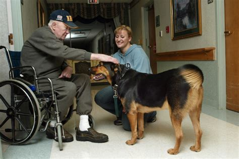 9 amazing ways dogs can change the lives of elderly humans