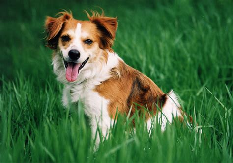 best small breeds small dogs breeds photograph of small dogs best small d