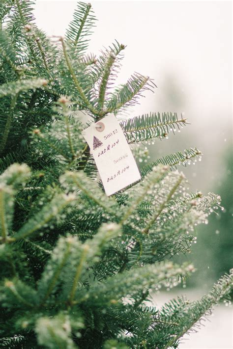 images of christmas tree farm los angeles best christmas