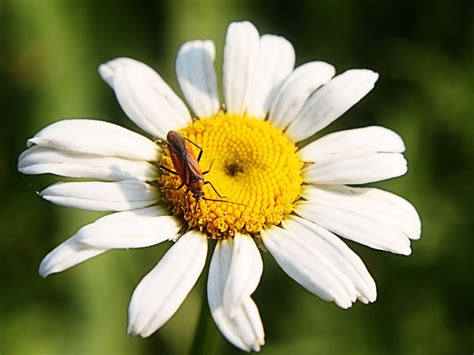 Lem Q Bon carletta s captures bugging miss