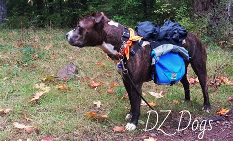 gear dogs dz s adventures groundbird gear backpack