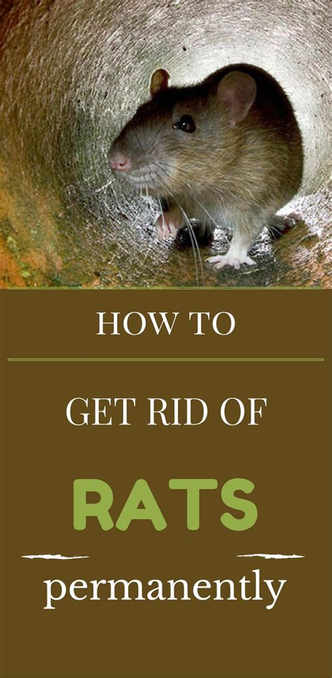 get rid of bugs in backyard how do i get rid of rats in my backyard small bugs that